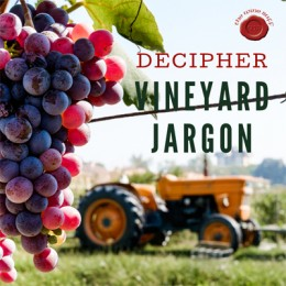 DECIPHER VINEYARD WINE JARGON
